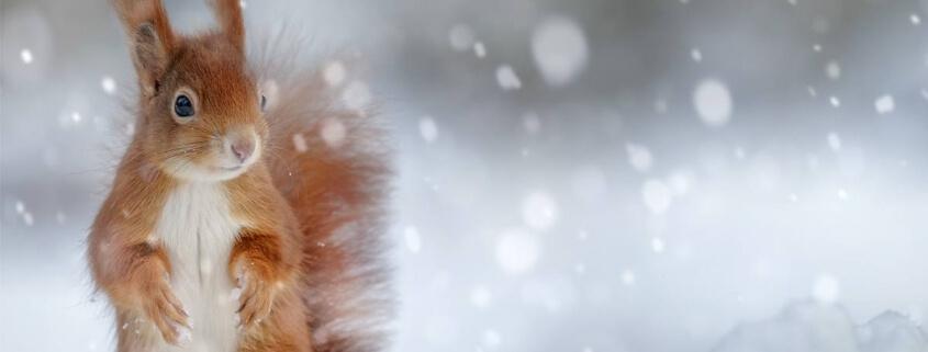 BACKWINKEL-Blog – Beitrag zum Thema Tiere im Winter